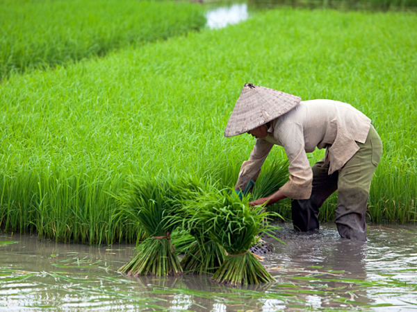 Number of hectares of farmland used more eco-efficiently |